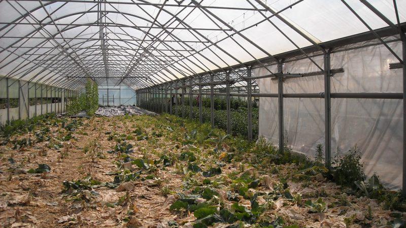 Jak wybrać zgrzewarkę do folii ogrodniczej?